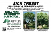 Tree Green (Tree Care)