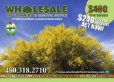 Wholesale Tree Trimming & Removal Service
